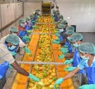 ABC Fruits Mango Pulp Project